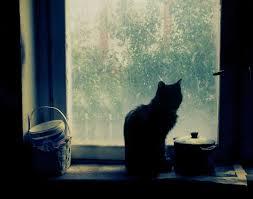 Gato en su ventana